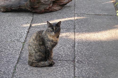 Today's Cat@20080314
