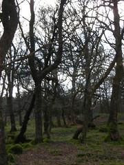 Mossy Field (Maria McMahon) Tags: loch ard