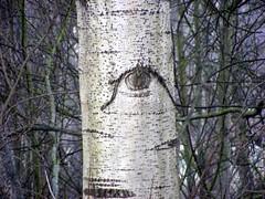 Auge (steffen68) Tags: natur auge baum