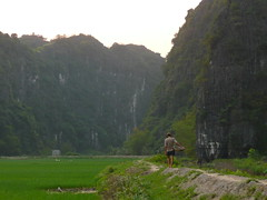 walking in the rice paddies (hornuts) Tags: travel rice paddy vietnam farmer ricepaddies ricefields ricepaddy indochine paddies indochina  ricefarmer northernvietnam  tamcoc northvietnam   ngodong ngodongriver tamcocpark  levietnam ilvietnam
