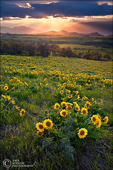 Enlightenment (Zack Schnepf) Tags: light sunset usa nature oregon river landscape spring columbia pasture gorge rays root zack preserve balsam rowena mccall schnepf