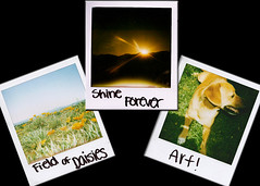 Shake It Like A Polaroid Picture (kbee photography) Tags: flowers sky dog sun mountain beauty field grass daisies shine arf daisy jaeger polaroidcamera polaroidpicture shinealways