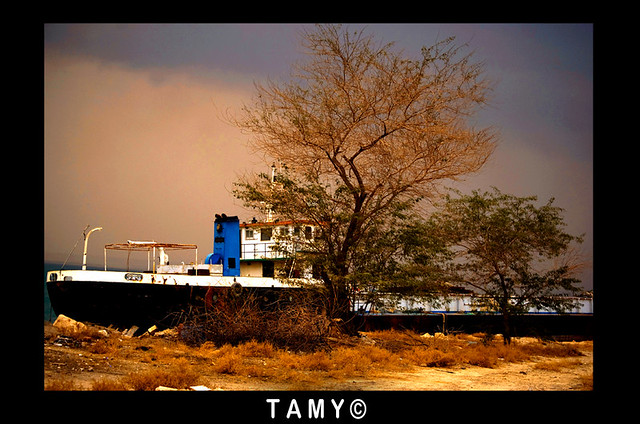 The first online photography workshop (FREE EDITING) by iTamy