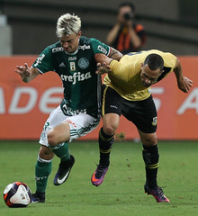 Palmeiras x São Bernardo (16/02) (sepalmeiras) Tags: allianzparque campeonatopaulista palmeiras sep sãobernardo sériea1 palmeirasxsãobernardo16022017 palmeirasxsaobernardo16022017 rguedes