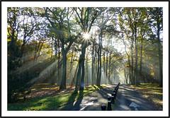 Le grand show  -  The big show (diaph76) Tags: france normandie seinemaritime lehavre forêt forest extérieur paysage landscape arbres trees lumière light raisdelumière lightrays sousbois undergrowth
