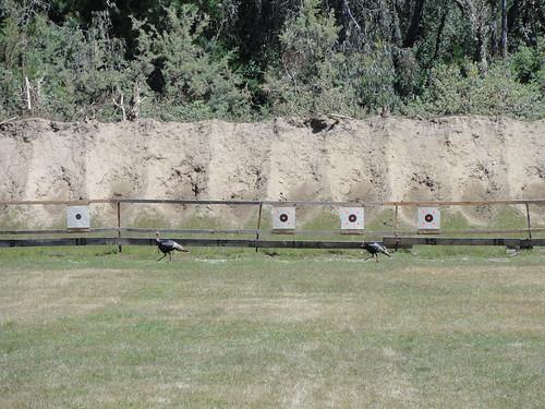 Seize fire sicne 2 turkeys walked into the range during firing period