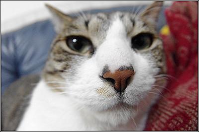 今日の猫(2011-05-27)