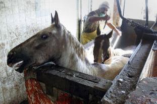 Kinship Circle - 2007-10-07 - Horse Slaughter 01