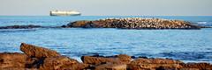 Boat and Seagulls (Matt.K) Tags: ocean sea seagulls beach birds boat rocks tynemouth seagul