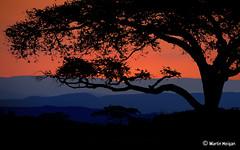 Bushveld Sunset (Martin_Heigan) Tags: africa camera trees sunset wild mountains flower tree nature colors silhouette digital poster landscape southafrica haze nikon bravo colours martin dusk postcard photograph layers d200 dslr za veld acacia breathtaking südafrika mpumalanga lowveld nelspruit sudafrica bushveld afriquedusud zuidafrika suidafrika áfricadosul sydafrika sudáfrica 18200mmf3556gvr blåner nikonstunninggallery heigan golddragon abigfave 12october2007 alemdagqualityonlyclub mhsetlandscapes mhsetuntouched mhsetbushveld mhmostviewed
