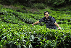 ND (irwandy) Tags: cameron malaysia nd cameronhighlands teaplantation boh perak bohtea irwandy sungaipalas sungeipalas sgpalas ladangteh