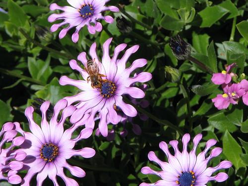 fiori sul Pier 39