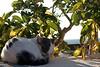 Cat having a Rest ! (Jean-christophe 94) Tags: bw animal cat kitten chat kitty gato rest sieste notmycat jc94 jeanchristophe94