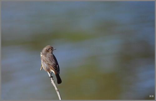 Birdie_1.jpg