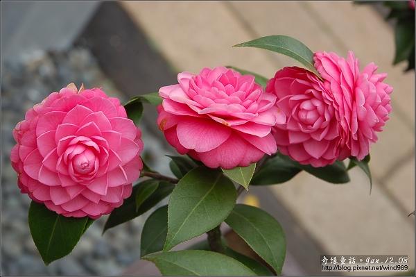 DSC_7238越之乙女(邱家花園)