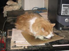 Mmmm, catnip