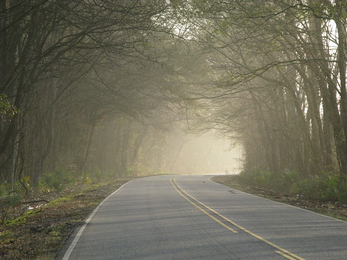 Misty morning near Melville, Louisiana, USA
