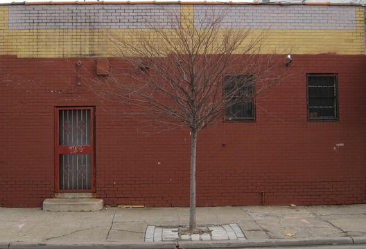 Gowanus Tree