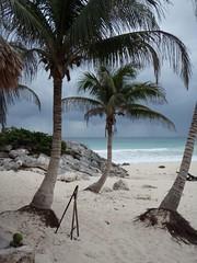 P1030293 (FlckrBrnd) Tags: sun beach tulum palmtree mexiko yuccatan