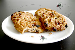 sexo sobre galletas (mayaibuki.me) Tags: fly maya chocolate chips mosca ahoy moscas galletas coockies cockies ibuki onces minichips galeta mayaibuki