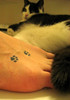 She thinks she's something with that tat - baah, I never show of my paws. My cat Rudolph,