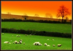 A TRIBUTE TO BEETHOVEN'S 6th SYMPHONY (PASTORAL) (Edward Dullard Photography. Kilkenny, Ireland.) Tags: kilkenny ireland painterly landscape irland eire beethoven pastoral hibernia symphony emeraldisle ierland superbmasterpiece edwarddullard betterthangood britishislesandireland worldwidelandscapes