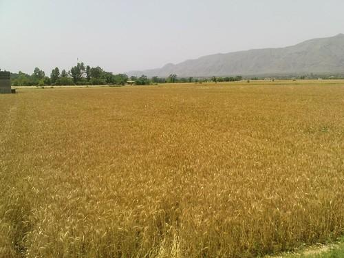 2461317406 58c7f5243d - Haripur-pakistan
