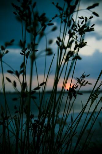 sea beach water grass stpetersburg sand florida salt fl waterway intercoastal pinellas lightroom tierraverde