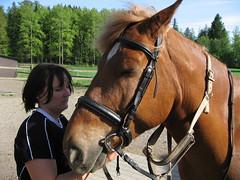 IMG_4892 (Maxiv) Tags: hevonen taavi
