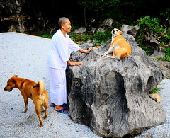 ,, Rocky, Nurse Nun, Pumpkin ,, (Jon in Thailand) Tags: nun rocky pumpkin dogs dog k9 k9s jungle monkeytemple thai buddhist shy rock boulder nikon d300 nikkor 175528 blue bluesandals coy happydogs happy street photography streetphotographyjunglestyle people streetphotography littledoglaughedstories