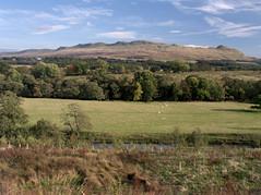 Campsie Fells (selkovjr) Tags: sheep glasgow stirling hill plug volcanic lochlomond endrick graze dumgoyne campsies campsiefells killearn endrickwater gartness kilearn