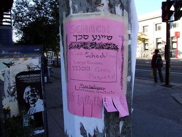Fresh schach poster
