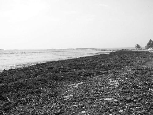 Una playa asimétrica - Nando © 2007 -
