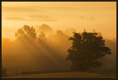 Silence is Golden (rob mccoll) Tags: trees sky sun mist field grass silhouette clouds sunrise countryside bravo shadows fields worcestershire morningmist magicdonkey orangeskies anawesomeshot impressedbeauty jalalspagesmasterpiecealbum heartofenglandway theperfectphotographer silhouettephotography alemdagqualityonlyclub