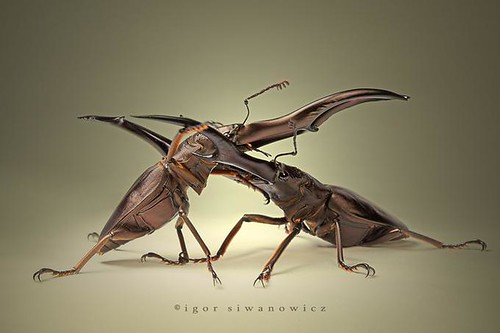1926163859 d4448c7787 Amazing Insects!