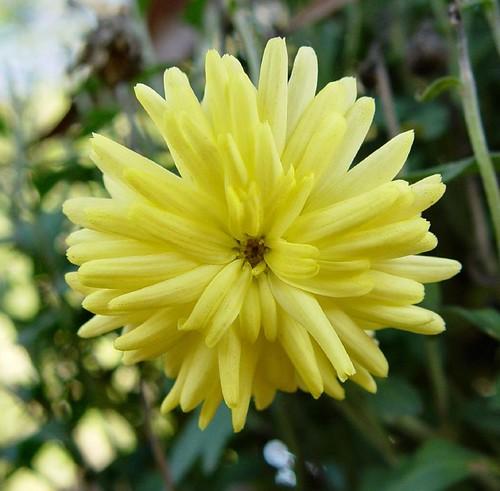 Yellowmum1