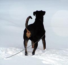 Lola_11408_Snow