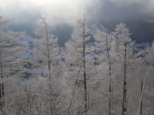 樹氷も、生まれて初めて見たわ