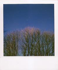 fresh air polaroid