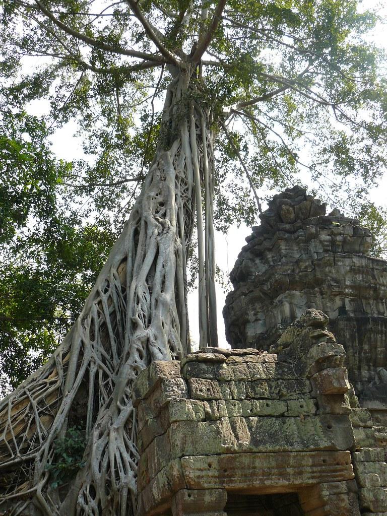 Cambodge - Angkor #82