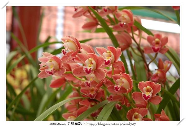 DSC_2565蘭花