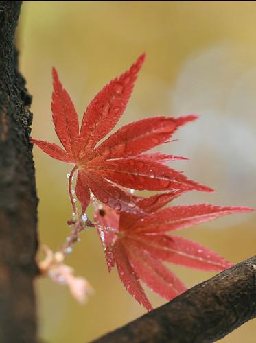 Tại sao lá lại đổi màu vào mùa thu?