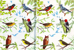 Bird Book (Katey Nicosia) Tags: birds illustration vintage book design pattern