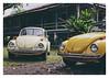 17_02_05_186p (2) (Quito 239) Tags: volkswagen 1971volkswagen 1971volkswagensuperbeetle superbeetleconvertible vw bug vocho escarabajo puertorico haciendaigualdad volky
