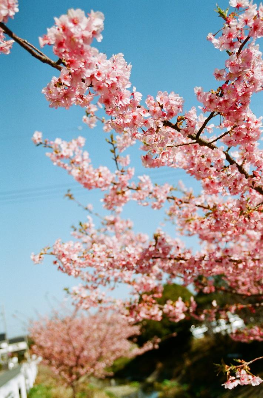 春天。隨拍by ME SUPER