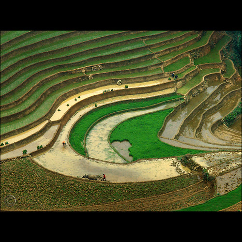 The Eye of the Rice paddies