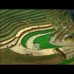 The Eye of the Rice paddies (NaPix -- (Time out)) Tags: portrait food man black green work canon landscape hope buffalo asia southeastasia view rice paddy farmers farming working aerialview aerial canoneos20d vietnam explore story fields info journalism sapa hmong paddies tms lifestory tellmeastory explored explorefrontpage ricefarming muonghoavalley napix weareplantingthericenow theeyeofthericepaddies manbuffaloandearthareone