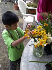 Pao with daffodils 2
