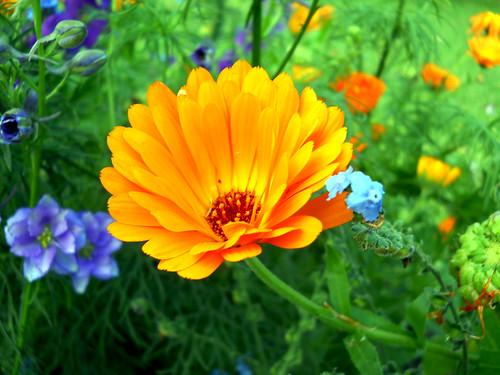 Flowers@ Victoria flower garden -Nuwaraeliya