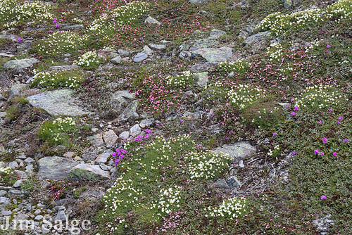 Alpine Plant Community